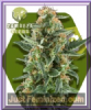Zambeza Power Plant XL Auto Female 5 Pot Seeds